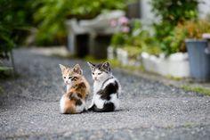 ラブリー-KittyCats