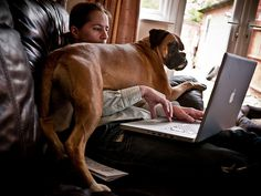 Working like a dog (127/365) by andy-harris, via Flickr