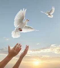 Embrayage Déclaration - De Pigeon À Colombe Par Vida Vida hEShj