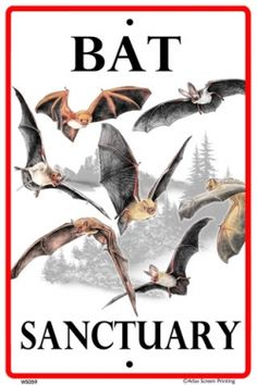 To attract bats into your garden, grow plants such as cornflowers, salvia, and phlox, all of which attract night-flying insects, and either building a roost or planting a cabbage palm for bats to sleep on.