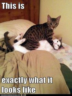 hilarious_cute_cats_640_high_48.jpg (525×700)