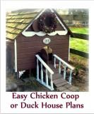 Gingerbread Chicken Coop or Duck House