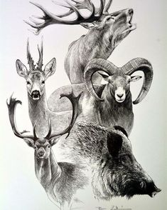 You are in the right place about simple Hunting Tattoos Here we Animal Sketches, Animal Drawings, Drawing Sketches, Pencil Drawings, Hunting Drawings, Hunting Tattoos, Hirsch Illustration, Logo Animal, Hirsch Tattoo