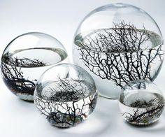 Self Sustaining Ecosphere   DudeIWantThat.com