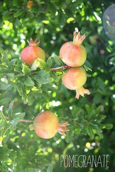 100% Végétal / Pomegranate