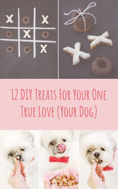 12 DIY Treats For Your One True Love (Your Dog)