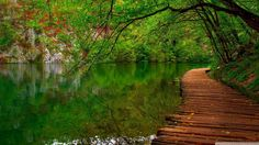 wooden pathway wallpapers hd