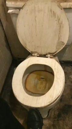 blogmorarsozinho • Áudio original Toilet, Bathroom, The Originals, Washroom, Flush Toilet, Full Bath, Toilets, Bath, Bathrooms