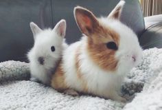 two of our baby bunnies  (selfmade) 03-05-2017  Pinterest // carriefiter  // 90s fashion street wear street style photography style hipster vintage design landscape illustration food diy art lol style lifestyle decor street stylevintage television tech science sports prose portraits poetry nail art music fashion style street style diy food makeup lol landscape interiors gif illustration art film education vintage retro designs crafts celebs architecture animals advertising quote quotes…