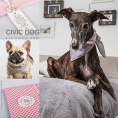 "O Clube da Tula en Instagram: ""We love your Civic neck... Be a #civicdog, by O Clube da Tula. Shop online at civicdog.com #civicdog #scarves for #dogs #scarf for #dogstagram #dogshow #dogslover #dogs #fashion #fashionista #bandana #galgo #galgos #greyhound #greyhoundlove #pitbull #labrador #bulldogfrances"""