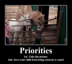 Priorities. 1st. Take the picture. 2nd. Save your child from being eaten by a camel.