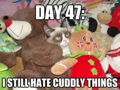 After 47 days undercover, Grumpy Cat still hates cuddly things Grumpy Cat Meme, Grumpy Cat Quotes, Cat Memes, Grumpy Kitty, Funny Cats, Funny Animals, It's Funny, Josie Loves, Crazy Cat Lady