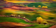 As Cores de Palouse  A bela paisagem dos vales de Palouse, no estado de Washington, nos Estados Unidos, foi clicada em diferentes épocas do ano e em momentos diversos da colheita do trigo. O resultado é de uma beleza singular.