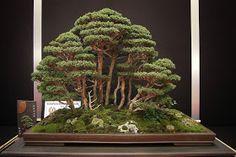 #Forët de bonsaï - Feel-Spirit-l'Esprit de Phil.[Bonsaï]: European #bonsaï San Show 2013, Saulieu France