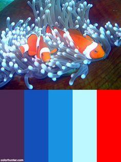 carpet anemone clownfish color pinterest