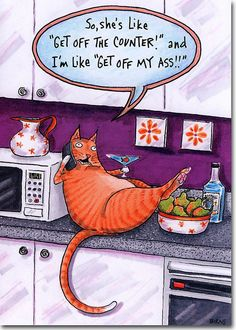 Details about Cat on Counter Funny Birthday Card – Greeting Card by Oatmeal Studios Cute Cats, Funny Cats, Funny Animals, Cute Animals, Cat Birthday, Funny Birthday Cards, Birthday Humorous, Birthday Sayings, Humor Birthday