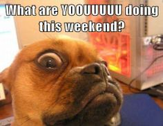 Image result for happy weekend with funny animals
