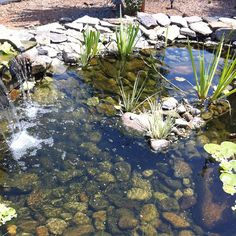 Pond - Raphael Love Social Media Mentor and Speaker Pond, Social Media, Fish, Spaces, Nature, Plants, Water Pond, Naturaleza, Pisces
