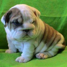 omg. those wrinkles <3