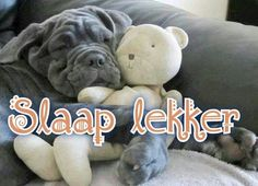 Slaap lekker Good Night Quotes, Morning Quotes, Cute Quotes, Funny Quotes, Goeie Nag, Day For Night, Night Night, A Funny, Afrikaans