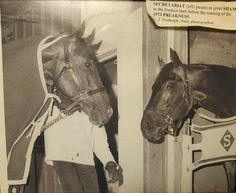 May 19, 1973. Preakness Stakes. Secretariat and Sham in the barn.