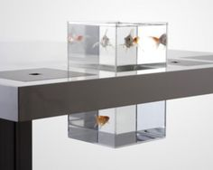 Acuario 'Milk desk', by Soren Kjaer
