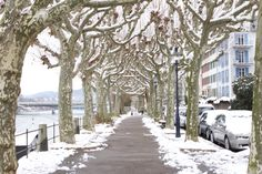 How about a walk on the Rhineside?  Even in winter this is a real treat.  #basel #baselswitzerland #switzerland #schweiz #expatlife #amazingswitzerland #expatlife #expatlifestyle #visitswitzerland #thingstodoinbasel #t2dbasel Visit Switzerland, Basel, Stuff To Do, Photographs, Walking, Winter, Amazing, Outdoor, Winter Time