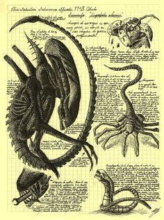 Alien life cycle - Da Vinci style