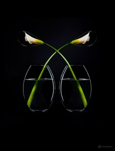 Stemless by Humabana. This Ikebana flower arrangement features White Calla Lilies.