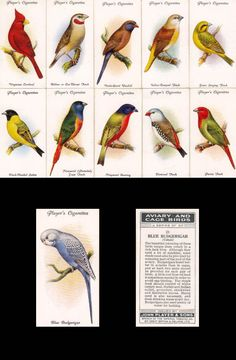 cigarettes card-Aviary and Cage Bird