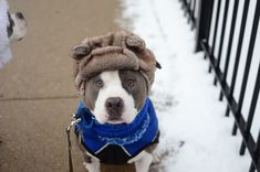 Two Pitties in the City: Dog Gear: On Winter Dog Coats (and a fantastic Giveaway!)