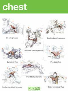 Ótimos exercício pra peito