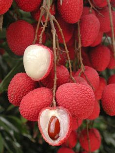 """Lychee fruit nutrition facts Delicious and juicy Lychee or """"Litchi"""" reminds you the arrival of summer. Botanically, this exotic fruit belongs to the family of Sapindaceae and named scie… Fruit And Veg, Fruits And Vegetables, Fresh Fruit, Kids Fruit, Seasonal Fruits, Lychee Fruit, Lychee Tree, Lychee Juice, Fruit Nutrition Facts"""