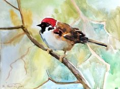 Sparrow original watercolor painting 12 X 9 in by ORIGINALONLY, $28.00