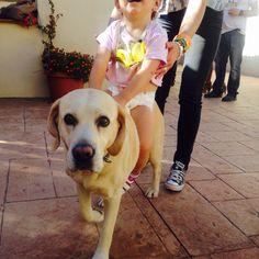 Nobleza animales #perros
