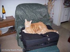 Rocky suitcase