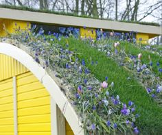 A green roof built at a steep slope over a garage...