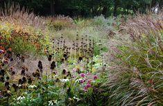 Piet Oudolf » Maximilianpark Prairie Planting, Landscape Architecture, Vineyard, Landscaping, Plants, Outdoor, Gardens, Outdoors, Vine Yard