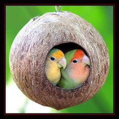 Birds 4 by Heavens-