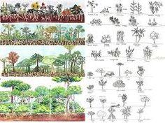 Resultado de imagem para desenhos de sistemas agroflorestais