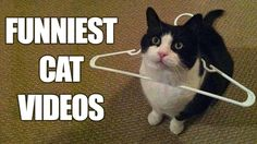 Funny Cat Compilation Try not to laugh........