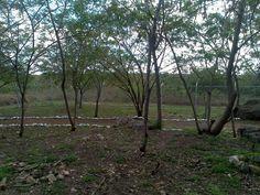 Parque Zoológico Animaya, Caucel, Yucatán, México