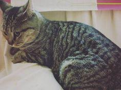No quiero ni respirar. #Lia en mi falda. Pues si que tiene que tener frío. #cats_of_instagram