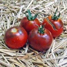 Blue Tomato Blue Fog ブルートマト・ブルー・フォグ