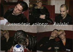 Rammstein asleep. They look so cute