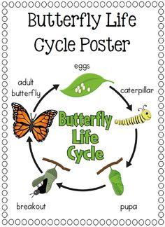 Paper Plate Life Cycles, Frog, Pumpkin, Apple, Sunflower and more$ http://www.teacherspayteachers.com/Product/Paper-Plate-Life-Cycles-Frog-Pumpkin-Apple-Sunflower-and-more-877497
