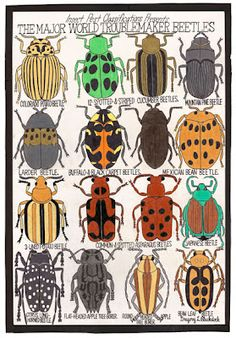 """Blackstock, Gregory L. """"The Major World Troublemaker Beetles"""", 2008 lead pencil, maker and crayon 95 x 65 cm © photo credit Collection de l'Art Brut, Lausanne Drawing Lessons, Art Lessons, Bug Art, Art Brut, Insect Art, Middle School Art, Arts Ed, Bugs And Insects, Outsider Art"""