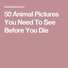 50 Animal Pictures You Need To See Before You Die