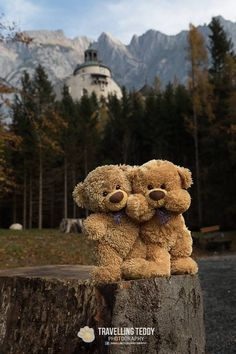 Sassy with distant relative Baby Teddy Bear, Teddy Bear Cakes, Teddy Bear Toys, Cute Teddy Bears, Teddy Bear Knitting Pattern, Knitted Teddy Bear, Tatty Teddy, Restaurants In Paris, Teddy Bear Pictures