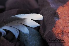 A feather left behind...